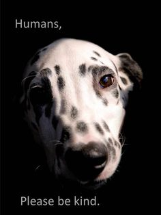How could you not be kind to beautiful creatures like Dalmatians Beautiful Creatures, Animals Beautiful, Beautiful Dogs, Mon Combat, Animals And Pets, Cute Animals, Wild Animals, Stop Animal Cruelty, Mundo Animal
