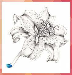 Lily Flower Tattoos, Flower Tattoo Drawings, Tattoo Sketches, Tattoo Flowers, Butterfly Tattoos, Watercolor Tattoos, Sketch Drawing, Rose Tattoos, Lilies Drawing