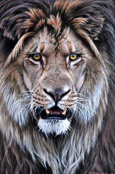 Original Lion Paintings - Alan M Hunt Wildlife Artist UK