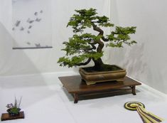 Bonsai Tree-Royalty free stock photos. All pictures are free for commercial and personal use. http://www.publicdomainpictures.net