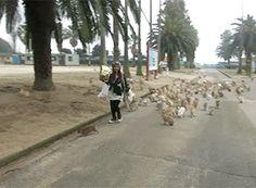 """L'île japonaise d'Okunoshima, dite """"l'île des lapins"""""""