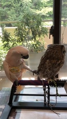 Animals Discover Fellow birb doesnt understand personal space - Tiere - Animals Cute Funny Animals Cute Baby Animals Funny Cute Animals And Pets Wild Animals Cute Animal Videos Funny Animal Pictures Cute Creatures Beautiful Creatures Funny Birds, Cute Funny Animals, Cute Baby Animals, Animals And Pets, Wild Animals, Small Animals, Cute Animal Videos, Funny Animal Pictures, Funny Chicken Pictures