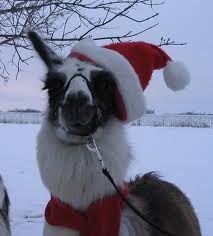 a christmas llama