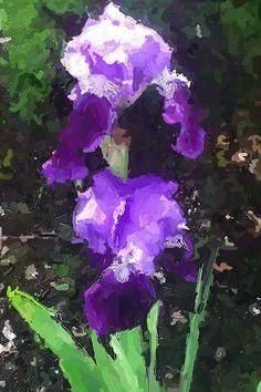 Iris  ...ink & paint...a Bent original