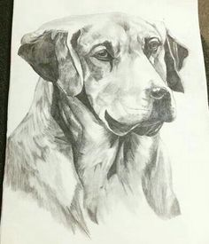 Dog ...simple drawing