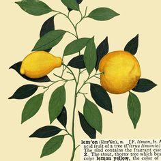 lemons botanical