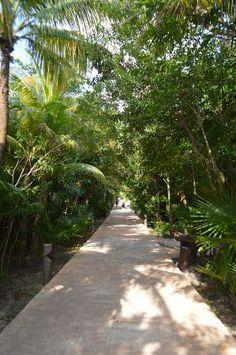 Catalonia Playa Maroma: walkway from reception to pool
