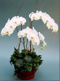 Same day flower delivery service. Send fresh flowers delivered by florists the same day you order them. Modern Flower Arrangements, Orchid Arrangements, Succulents Garden, Planting Flowers, Fresh Flowers, Beautiful Flowers, Flowers Vase, Floral Design Classes, Orchid Centerpieces