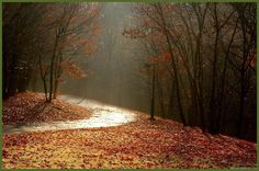 Вот и осень, и улетают птицы... Here is the autumn, and flying birds...