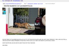 """bigmoutheyebrows: """" LOOK AT THIS CRAIGSLIST LISTING """""""