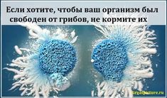 Если хотите, чтобы ваш организм был свободен от грибов, не кормите их #healthy #здоровье #красота #помощь #самоеинтересное #полезныесоветы #советы