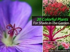 Color in the shady areas...