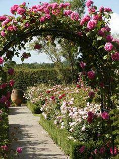 Lindo arco,como quedará con bouganvilias? Perhaps a climbing rose on a trellis?