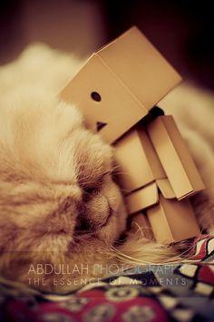 Cat cuddling Danbo