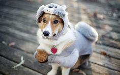 Cute Dog Coustume