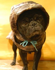Wrap your pooch up in an original chic and sleek eco-friendly Upcycled Umbrella Rain Coat made with the salvaged fabric from broken umbrellas. Cute Pug Pictures, Young Designers, Cute Pugs, Pug Life, Diy Stuffed Animals, Brighten Your Day, French Bulldog, Pure Products, Pets