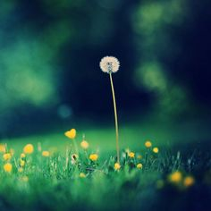 #wonderfulflowers