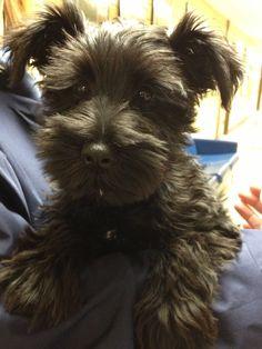 tnis one looks like my baby grand-dog Morgan