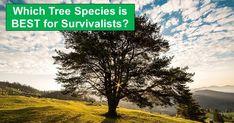 7 Common Trees Ranked for Survival Purposes | reThinkSurvival.com Diy Camping, Camping Hacks, Garden Compost, Gardening, Pinterest Garden, One Tree, Photo Tree, Bushcraft, Homesteading