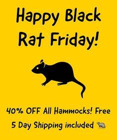 Welcome to iGotRats Rat Care, Black Rat, Cute Rats, Happy Black, New Adventures