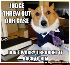 lol Lawyer Dog