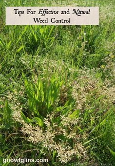 Tips for Effective and Natural Weed Control | One of the many challenges of growing and maintaining a summer garden is weed control. If you ...