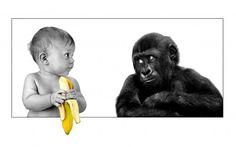 Bebé y mono
