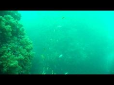 少人数で群れとサンゴを見る東京のダイビングスクールは常磐線亀有も近い