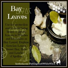 Bay leaves in witchcraft Magic Herbs, Herbal Magic, Green Witchcraft, Wicca Witchcraft, Witch Herbs, Hedge Witch, Kitchen Witchery, Witches Brew, Healing Herbs