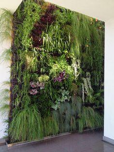 Uno de nuestros proyectos pared verde. ¡Se ve hermoso! pared verde naturaleza interior eco al aire libre