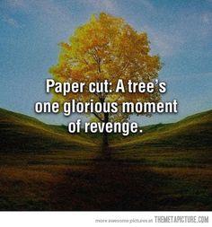 A tree's revenge… #funny #lol #haha