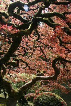 portland, or - japanese garden