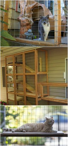 By installing a catio, you can allow your cat to safely enjoy the outdoors while keeping wildlife free from his clutches.