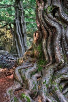 Unbelievably beautiful root system../valkyriethais/ looking for rainbows in the moonlight