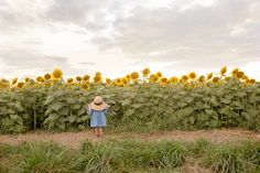 kids sunflower pictures family session big hat denim dress cute girl cynthia whiteside photography