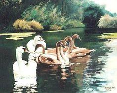 Robert SCHOULER - Cygnes en famille sur le Brunnwasser - Painting - huile sur toile
