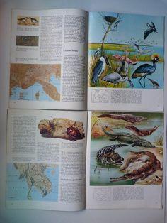 Lote 16 Fascículos Naturalia, Enc. De La Ciencias Naturales - $ 100,00 en MercadoLibre