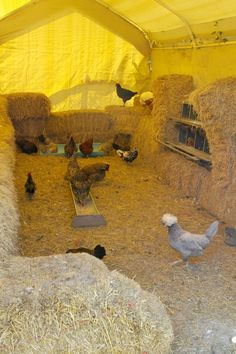 Excellent (provides feed for the hens also!) - A small farm's story of a unique, inexpensive tent coop for keeping chickens, and the ancient 'deep litter' method for caring for chickens. Keeping Chickens, Raising Chickens, Backyard Farming, Chickens Backyard, Gallus Gallus Domesticus, Chicken Runs, Chicken Feed, Building A Chicken Coop, Mini Farm