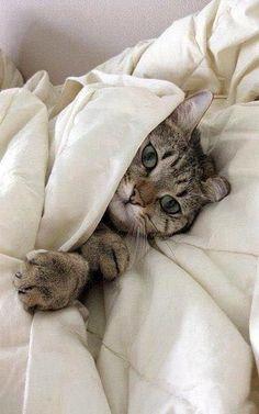 So cozy... #cats