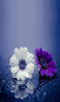 flores blanca y mora
