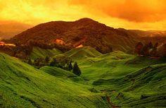 tea plantations ... Cameron Highlands, Malaysia