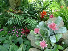 Pink bromeliads, gingers, crotons and ferns. A lovely array of tropical mid-story plants. Florida Landscaping, Florida Gardening, Tropical Landscaping, Garden Landscaping, Landscaping Ideas, Luxury Landscaping, Landscaping Software, Landscaping Company, Exotic Flowers