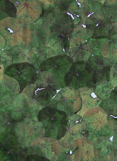 Pattern! Color! Pressed Nasturtium leaves. (byTHE STUDIO GARDEN).  Vialeprocrastinateur.