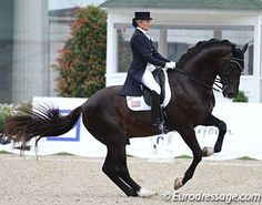 Calecto IV. Pinned with gratitude by www.DressageWaikato.co.nz.