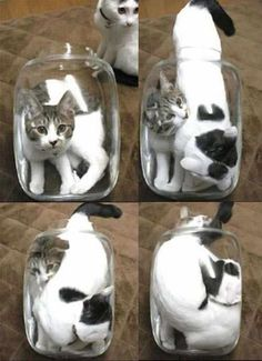 Pickled Cats