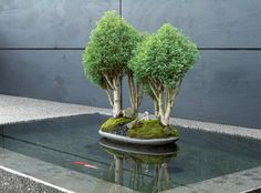 Dad was talking about diverting the river on land to a pond. getting fish, turtles etc. this would look dope in Trinidad. Concrete bonsai garden by Arko
