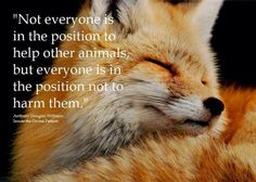 """Not everyone is in the position to help other animals, but everyone is in the position not to harm them."" Anthony Douglas Williams - Inside the Divine Pattern"