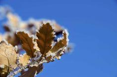 Quercia ghiacciata nell'azzurro by giovanni frenda