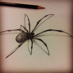 realistic spider sketch - Google Search