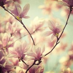 Hey, I found this really awesome Etsy listing at http://www.etsy.com/listing/24630744/flower-photography-magnolia-photograph